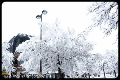 LD-Gerald-Snow-0023-2020-04-16
