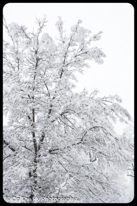 LD-Gerald-Snow-0041-2020-04-16
