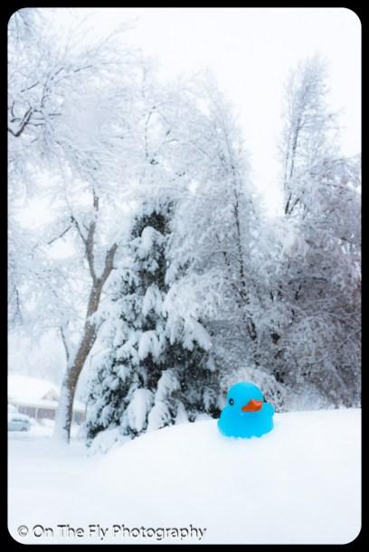 LD-Gerald-Snow-0049-2020-04-16
