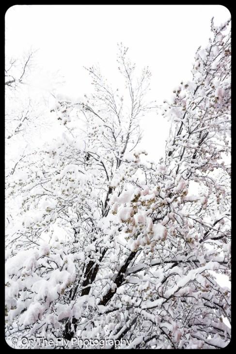 LD-Gerald-Snow-0052-2020-04-16