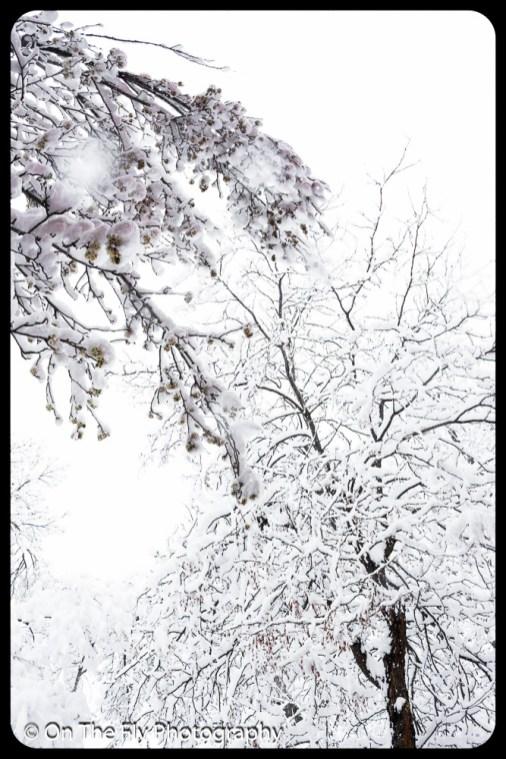 LD-Gerald-Snow-0053-2020-04-16