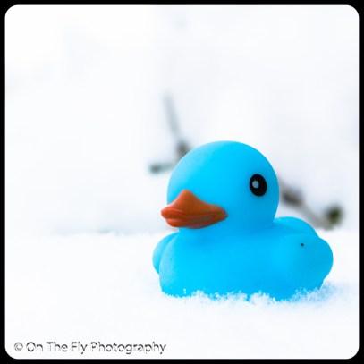 LD-Gerald-Snow-0055-2020-04-16