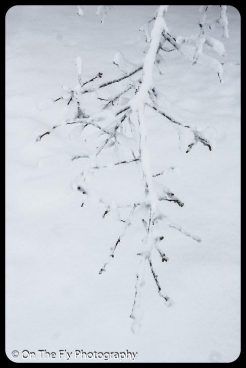 LD-Gerald-Snow-0061-2020-04-16