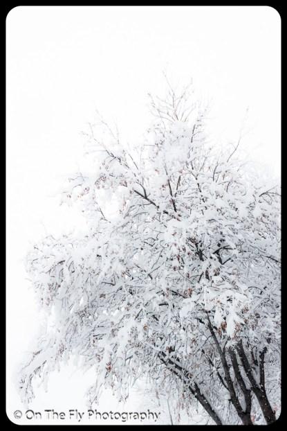 LD-Gerald-Snow-0068-2020-04-16