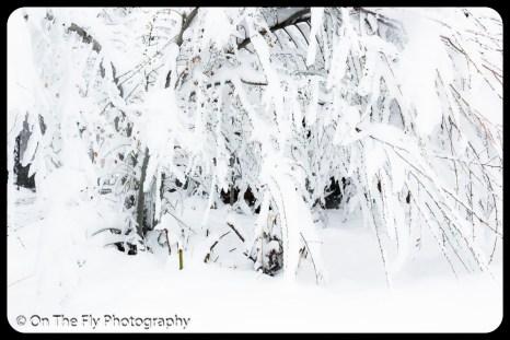 LD-Gerald-Snow-0071-2020-04-16