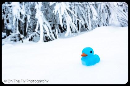 LD-Gerald-Snow-0072-2020-04-16