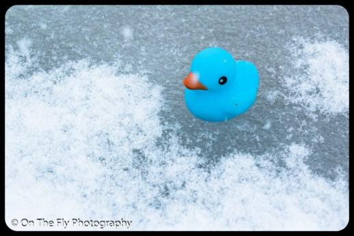 LD-Gerald-Snow-0087-2020-04-16