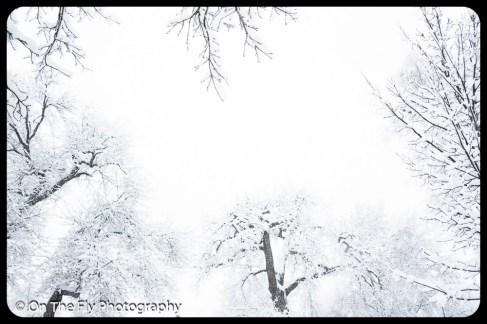 LD-Gerald-Snow-0098-2020-04-16