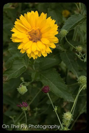 Flowers0002-2020-07-15