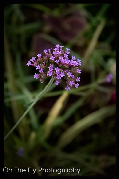 Flowers0004-2020-07-15