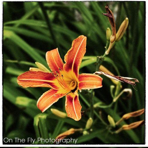 Flowers0008-2020-07-15