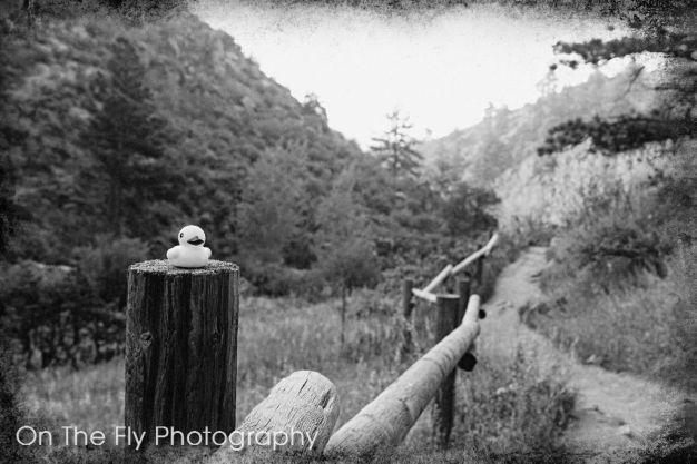 Horsetooth-Mountain-0012-2020-08-25