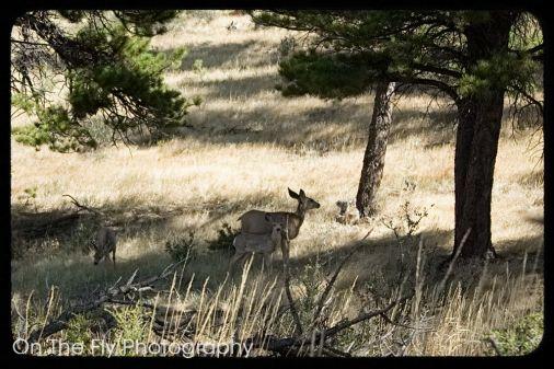 Horsetooth-Mountain-0029-2020-09-03