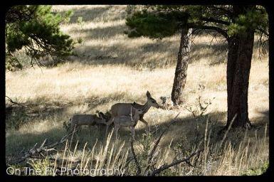 Horsetooth-Mountain-0030-2020-09-03