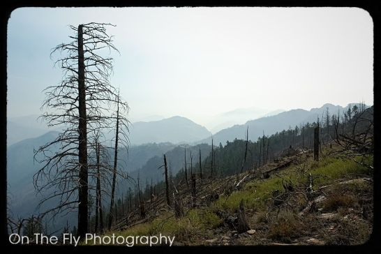 Mt-McConnel-0038-2020-08-17