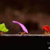 Trabajadora como una hormiga