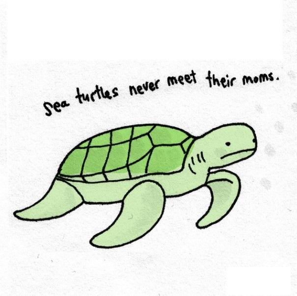 海龟总是找不到自己的妈妈。