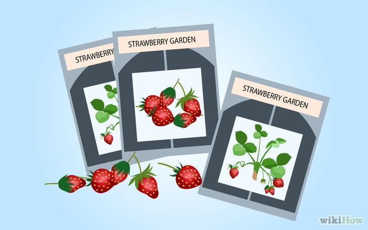 以Grow Strawberries Step 30为标题的图片