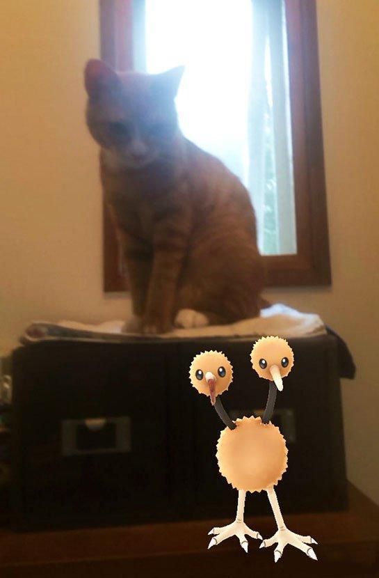 """当然,宠物们不会真的看得见这些虚拟时间的小家伙,只不过现在""""错位摄影""""似乎又发展出一个新的形式呢!期待国服早日开通,可以让大家的宠物与小精灵合影。"""