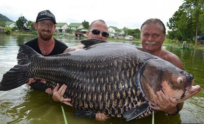 男子钓起200斤巨型鲤鱼 6人合力搬上车