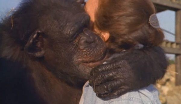 琳达和Swing深情拥抱。(视频截图)