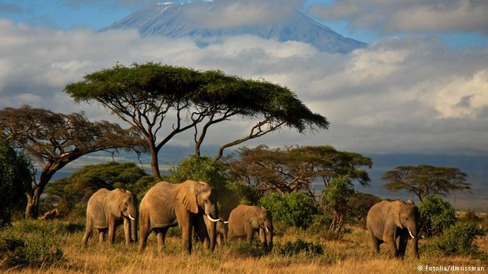 Elefant Elefanten Herde Elefantenherde Afrika Tansania