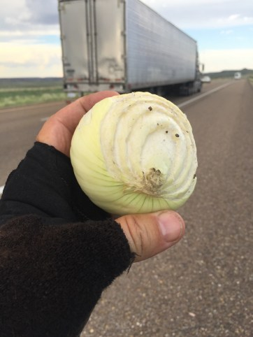 I was passed by at least three dozen 18 wheelers carrying onions.