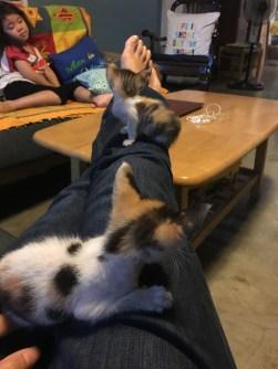 kittens_March2017