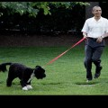 OBAMACARE: Your Dog Might Have Better Healthcare Than You Do