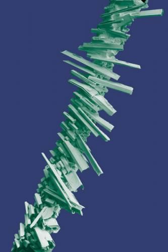 Zdánlivá banalita - ale jak vyfotografovat pod elektronovým mikroskopem ojíněnou trávu, aniž by roztály ledové krystaly? Laboratořv Beltsville v Marylandu pořídila tento efektní snímek jíní na čepeli listu trávy jako ukázku možností práce s rastrovacím elektronovým mikroskopem (SEM) při velmi nízké teplotě.