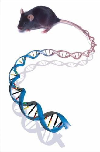 Genetika je vědou, která významným způsobem ovlivňuje budoucnost lidstva. Od roku 1953, kdy byla objeven model základní molekuly dědičnosti – kyseliny deoxyribonukleové (DNA), až do dnešních dnů proběhla celá řada výzkumů a bylo uskutečněno mnoho objevů. Na deseti objevech, které tuto oblast výzkumu zásadně ovlivnily, se s profesorem Ing. Jaroslavem Petrem, DrSc. z Výzkumného ústavu živočišné výroby shodl též doc. MVDr. Ivan Míšek, CSc., ředitel Ústavu živočišné fyziologie a genetiky Akademie věd ČR, který je zároveň vedoucím Laboratoře genetiky a embryologie téhož ústavu.