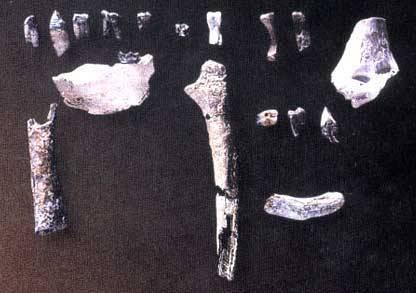Paleontologové objevili v severní části Etiopie kosterní pozůstatky předchůdce dnešního člověka staré 4,5 milionu let.