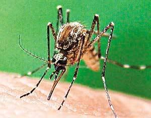 Odborníci z výzkumného centra v britském Rothamstedu tvrdí, že lidské tělo vylučuje jisté chemické látky, které odpuzují dotěrný hmyz.