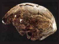 Nejnovější analýza lebek druhu Homo sapiens, které byly objeveny v roce 1967 poblíž řeky Omo v jihozápadní Etiopii, ukázala, že jsou o téměř 40 tisíc let starší, než se doposud předpokládalo.