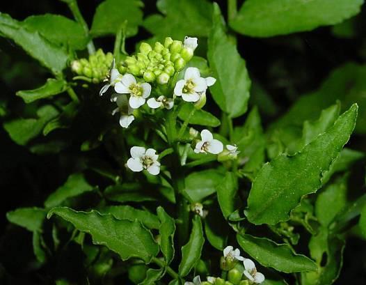 Mendelovy zákony, staré 150 let, čekají na přepsání! Američtí odborníci z Purdue University totiž odhalili, že rostliny si samy dokážou upravit poškozený genetický kód.