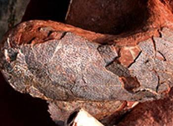 Zkamenělé ostatky dinosaura v těchto dnech objevil v čínské provincii Jiangxi mezinárodní tým paleontologů. Uvnitř těla pradávného tvora vědci navíc nalezli neporušená vejce!