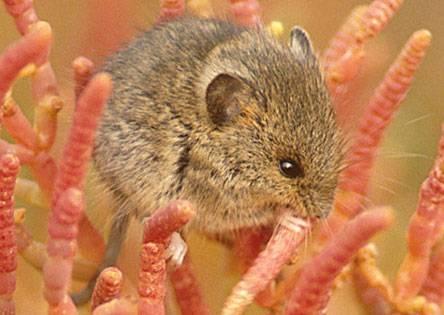 Američtí vědci nyní oznámili, že se jim podařilo uvést laboratorní myšky do stavu, který se blíží zimnímu spánku. Jejich objev má zásadní význam!