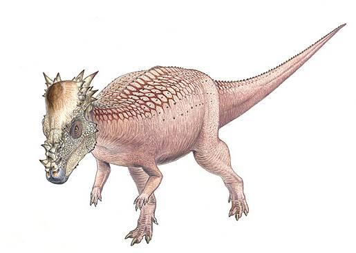 Američtí paleontologové nedávno objevili v Jižní Dakotě téměř neporušenou lebku podivného druhu dinosaura, o jehož existenci doposud neměli ani tušení.