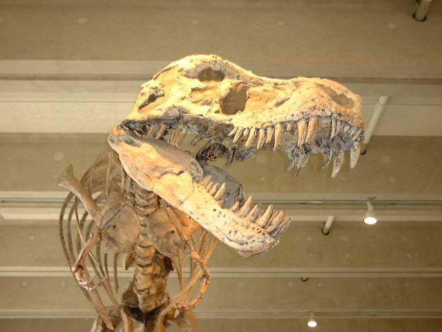 Američtí paleontologové už prý vědí, jak na to! Objevili způsob, jak u ostatků dávných tvorů rozpoznat, zda se jedná o samce, nebo o samici.
