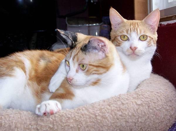 Možná jste si jako majitelé koček a psů někdy uvědomili rozdíl mezi těmito domácími mazlíčky. Kočky nemají rády sladkosti, zatímco psi je přímo milují.