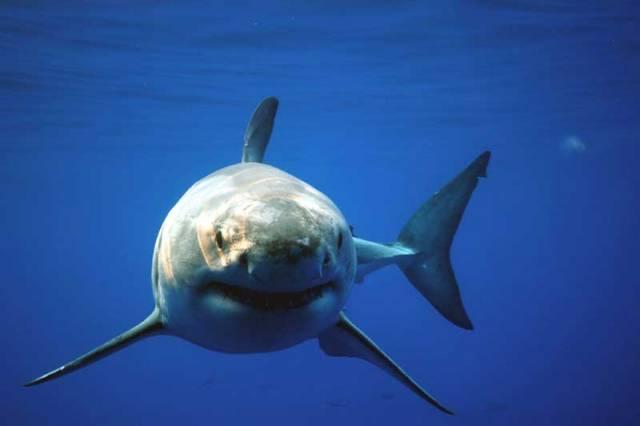 O žralocích se vyprávějí příběhy, které děsí turisty snad u všech moří. Můžeme se s nimi setkat i ve sladké vodě? Mohou být v něčem i prospěšní? Co o nich vlastně víme?