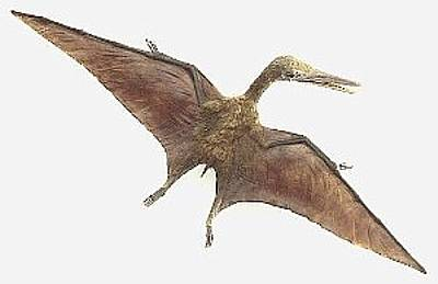 Na základě nejnovějších nálezů ostatků pterosaura se britští paleontologové domnívají, že rozpětí křídel tohoto pradávného tvora dosahovalo až neuvěřitelných 18 metrů.