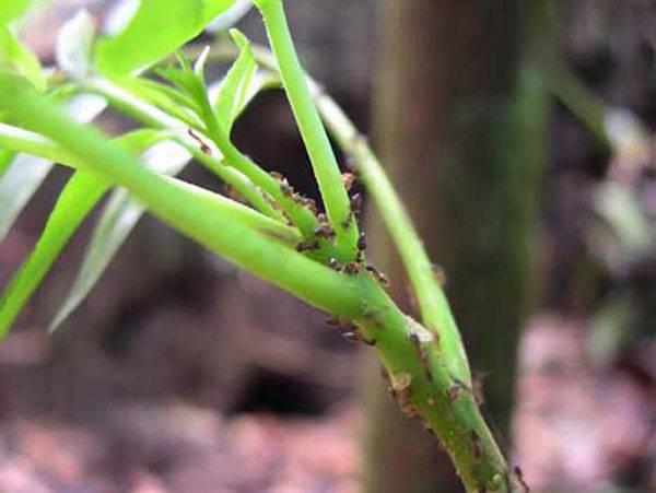Záhadu tajemných částí amazonského pralesa, kde se dlouhodobě daří pouze jednomu rostlinnému druhu, nyní rozluštili američtí odborníci ze Stanfordovy univerzity.