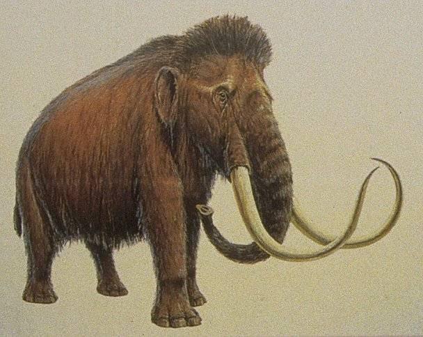 Němečtí genetici přečetli rekordní úsek genetické informace pravěkého tvora. Objektem jejich zájmu se tentokrát stal mamut.