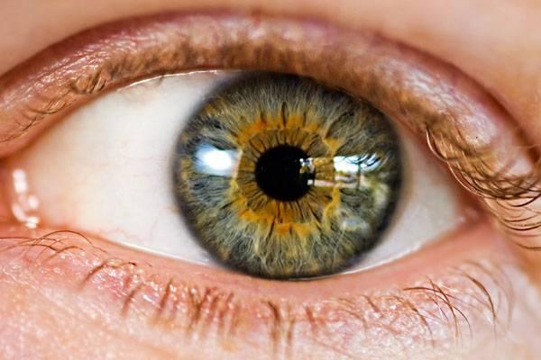 Zrakem přijímáme zhruba tři čtvrtiny všech vjemů z okolí. Jak jsme ale k očím vlastně přišli? Na to velmi úspěšně hledají odpověď i čeští vědci. Ti navíc odhalili nečekanou spojitost mezi vývojem zraku a sluchu.