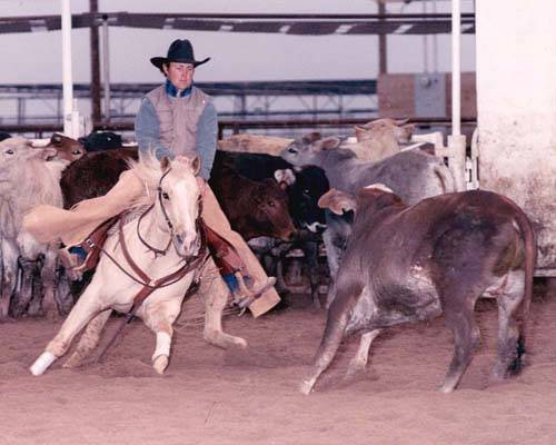 Budou v koňských soutěžích vítězit slavní plemeníci sami před sebou?