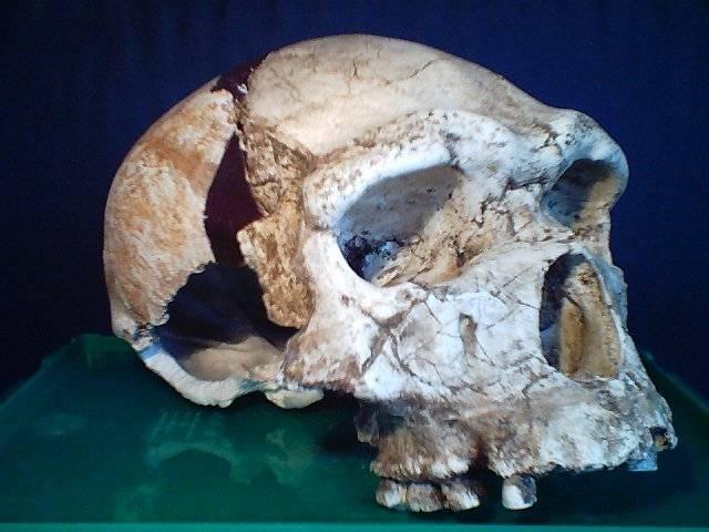 V severovýchodní Etipoii byla oběvena lebka tvora, který mohl být přímým předchůdcem moderního člověka.