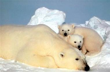 Mezinárodní unie pro ochranu přírody (World Conservation Union) oznámila, že v současnosti je vyhubením ohroženo 16 000 druhů.