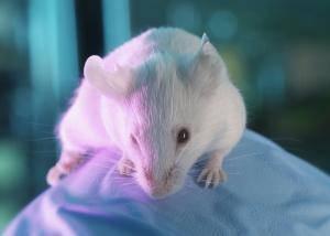 Vědcům se podařilo transplantací bílých krvinek od myší, které jsou odolné vůči zhoubnému bujení, potlačit nádory i u nepříbuzných jedinců.