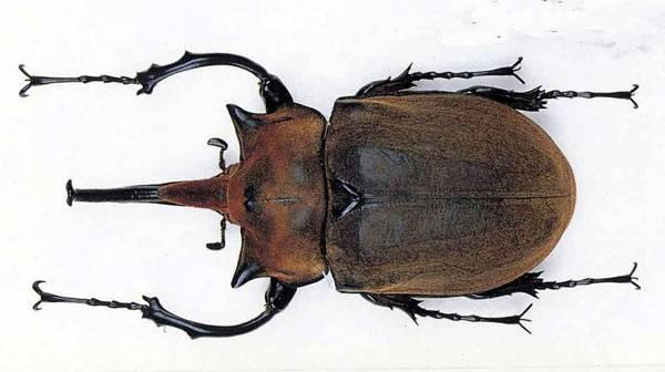 Hmyz je evolučně nejúspěšnější skupinou pozemských živočichů - zahrnuje plné tři čtvrtiny všech známých živočišných druhů. Ačkoli ti nejmenší z přibližně 1 milionu popsaných druhů měří pouhé 0,2 mm, největší dosahují řádově desítek centimetrů. 21. STOLETÍ se tentokrát zaměřilo právě na ty nejimpozantnější obry.